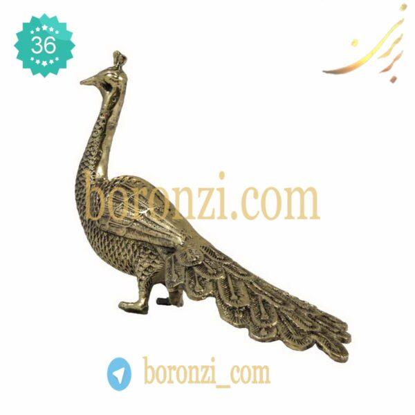 طاووس برنزی